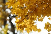 Beautiful autumn leaves, close-up