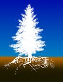 illustration with pine tree with root in dirt