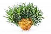 Exotic Mutation Pineapple