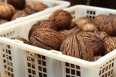 Dried Coconut In Basket At The Garden