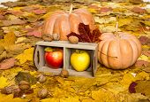 apples in crate on autumn leaves background
