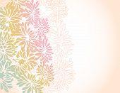 Asian Chrysanthemum Flower Border Background