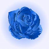 picture of blue rose  - Flower blue rose beautiful rose simple  symbol  of love vector illustration - JPG