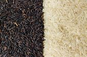 picture of rice  - Food background with two rows of rice varieties  - JPG