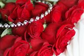 stock photo of rose bud  - Beautiful fresh red rose - JPG