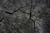 picture of decomposition  - Texture of wood 