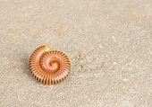 foto of millipede  - Close up millipede on the cement floor - JPG