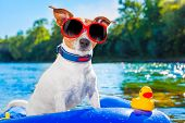 pic of toy dogs  - jack russell dog sitting on an inflatable mattress in water by the sea river or lake in summer holiday vacation rubber plastic toy included - JPG
