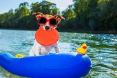 foto of toy dogs  - jack russell dog sitting on an inflatable mattress in water by the sea river or lake in summer holiday vacation rubber plastic toy included - JPG