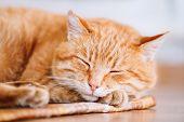 foto of laminate  - Peaceful Orange Red Tabby Cat Male Kitten Curled Up Sleeping In His Bed On Laminate Floor - JPG