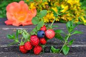 stock photo of strawberry plant  - Macro shot of scented plants and fruit blueberry wild strawberry and wild thyme in foreground and St - JPG