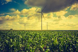 picture of windmills  - Vintage photo of windmills standing on corn field - JPG