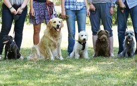 pic of working-dogs  - Group Of Dogs With Owners At Obedience Class - JPG