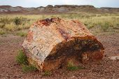Petrified Log In The Petrified Forest National Park