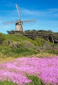 Dutch Windmill At The Golden Gate Park In San Francisco