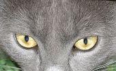 Amazing Cat Eyes