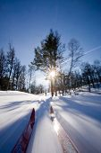 picture of nordic skiing  - Motion action shot of cross country skiing - JPG