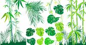 Tropical leaf and bamboo set, vector illustration
