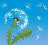 Vector image of dandelion
