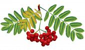Vector image of red rowan