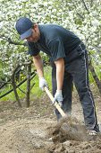 Man with spade in vegetable patch
