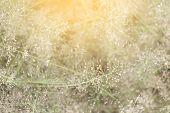 Blurred Grass Nature, Soft Grass Flowers Fresh For Background, Small Grass Meadow Blur In Sun Light poster