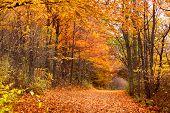 Rural road in Michigan in autumn time