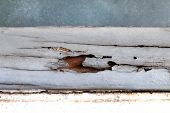 Termite Nest Hole At Wooden Wall, Nest Termite At Wood Decay Window Sill Architrave, Background Of N poster