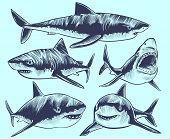 Sketch Shark. Swimming Sharks With Open Mouth. Underwater Animal Vector Tattoo Collection. Illustrat poster