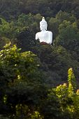 Buddhas In The Jungle