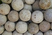 Woodapple fruits