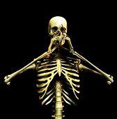 Bone 8