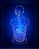 stock photo of gastrointestinal  - Abstract gastrointestinal system - JPG