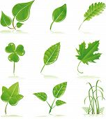 stock photo of green leaves  - Vector clip art of a variety of fresh green growing leaves and grass blades - JPG