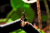Wood ant on a broken branch.