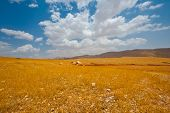 foto of samaria  - Big Stones in Sand Hills of Samaria Israel - JPG