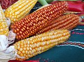 Corn over the table