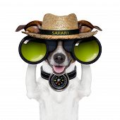 picture of safari hat  - binoculars safari with compass dog watching out - JPG