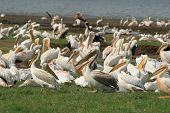 African Bird Life