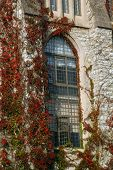 foto of olaf  - Vines climb up a wall and surround a window of a building at St - JPG