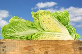 fresh chinese cabbage in a wooden crate against a blue sky with clouds