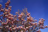 Fruit Tree With Flowers