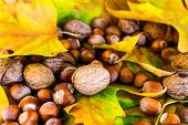 foto of ground nut  - Nuts and hazelnuts spilled over ground autumn leaves - JPG