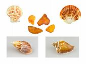 Shells, Snails And Amber
