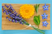 stock photo of borage  - Summer herbs and edible flowers on wooden plate on blue background - JPG