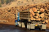 picture of logging truck  - A log truck delivers its load to a sawmill in Oregon - JPG