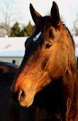 Equine Portrait In The Sun
