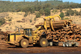 pic of logging truck  - A large wheeled loader unloads a log truck at a small log sawmill in Oregon - JPG