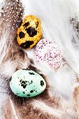 Group Of Colored Quail Eggs With Feathers Macro. Hq Photo Of Quail Eggs With Copy Space For Text.
