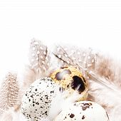 Group Of Raw Quail Eggs With Feathers Macro. Hq Photo Of Quail Eggs With Copy Space For Text.